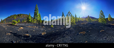 Panoramic view of a lava field with Teide volcano and pine trees against the sun, Teide National Park, Tenerife, - Stock Photo