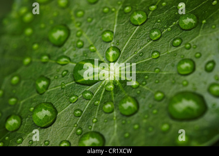 Close up of water droplets on leaf - Stock Photo