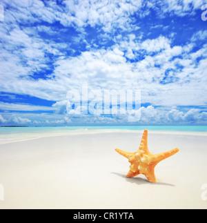 A starfish on a sandy beach in Maldives - Stock Photo