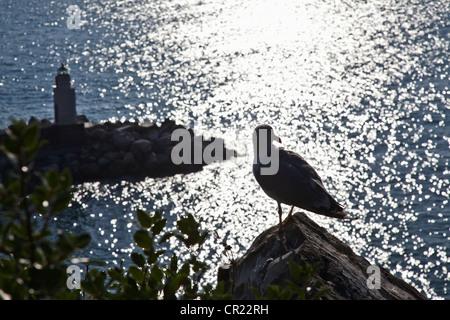 Seagull perched on coastline rock - Stock Photo