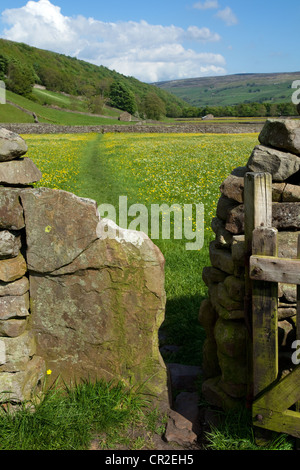 Farm gate & meadows; The Bottoms in the North Yorkshire Dales Meadows, near Gunnerside, National Park, Richmondshire, - Stock Photo