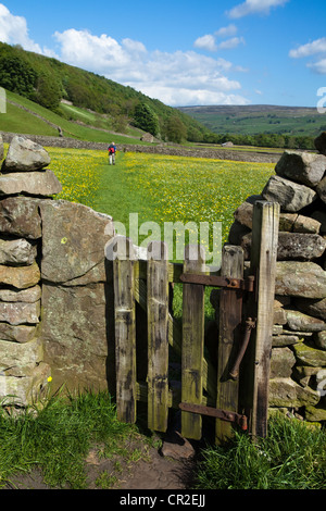 'The Bottoms' _ Walkers and Ramblers in farmland in the North Yorkshire Dales Meadows, near Gunnerside, National - Stock Photo