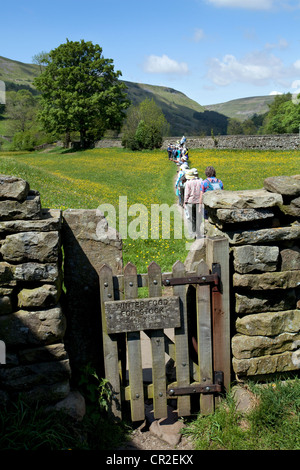 Trails & paths, Walkers and Ramblers in farmland in the North Yorkshire Dales Meadows, near Muker, National Park, - Stock Photo