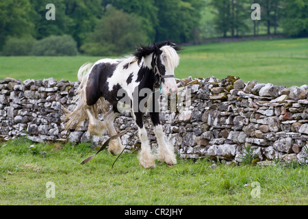 Fell End, Sedbergh. A traveller's camp _Attending the annual Appleby Horse Fair, Cumbria, UK - Stock Photo