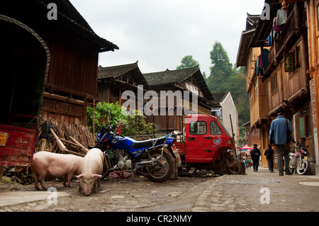 Two pigs, a blue motorcycle, a red van and people walking in a street, Zhaoxing Dong Village, China - Stock Photo