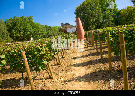 France, Paris, vineyards in the Bercy Park - Stock Photo