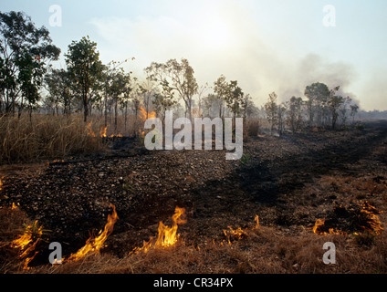 Australia, Northern Territory, Kakadu National Park, UNESCO World Heritage, Controlled burn, fire in the bush - Stock Photo