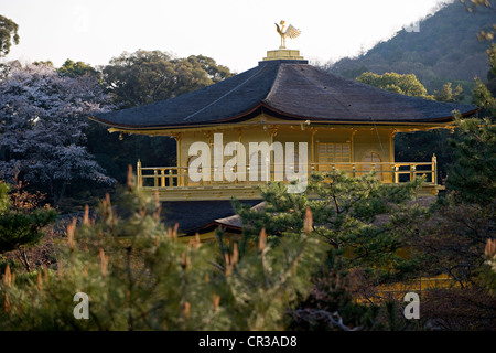 Japan, Honshu Island, Kansai Region, city of Kyoto, Kinkaku ji Temple UNESCO World Heritage, the Golden Pavilion - Stock Photo
