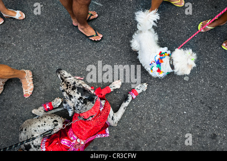 Disguised dogs take part in the Blocao pet carnival show at Copacabana beach in Rio de Janeiro, Brazil. - Stock Photo