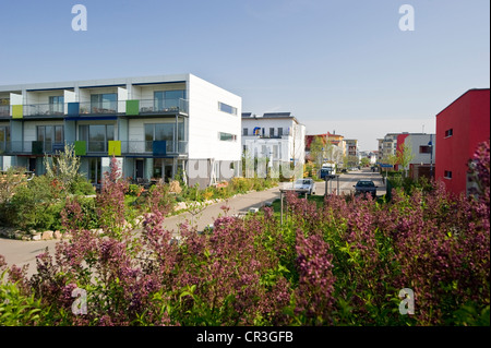 passive houses rieselfeld district freiburg im breisgau stock photo royalty free image. Black Bedroom Furniture Sets. Home Design Ideas