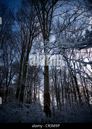 Snow-covered forest, Gysenberg, Herne, Ruhr Area, Germany, Europe - Stock Photo