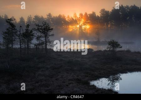 Swamp at dawn, early morning, sunrise, Dalarna, Sweden, Scandinavia, Europe - Stock Photo