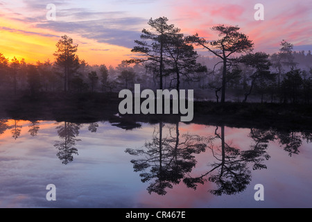 Early morning, dawn, in the swamp, Dalarna, Sweden, Scandinavia, Europe - Stock Photo