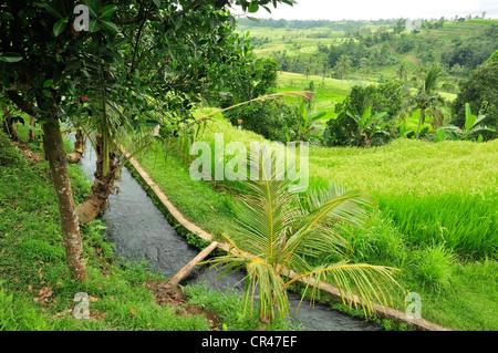 Rice terraces, Jatiluwih Tabanan, Bali, Indonesia, Asia - Stock Photo