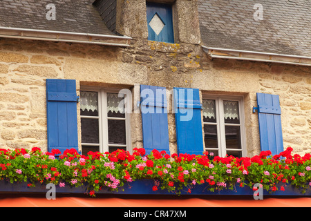 Two windows with lace curtains, blue shuitters and geraniums in window boxes in Concarneau, Brittany, France. - Stock Photo