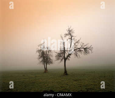 Trees in the morning light, Murnau Moor, Upper Bavaria, Bavaria, Germany, Europe - Stock Photo