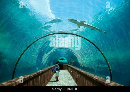 Bahamas New Providence Nassau Paradise Atlantis Resort Pool Palms Stock Photo 4526611 Alamy