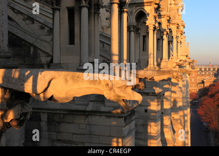 France, Paris, Ile de la Cite, gargoyles on Notre Dame de Paris cathedral cathedral north facade - Stock Photo