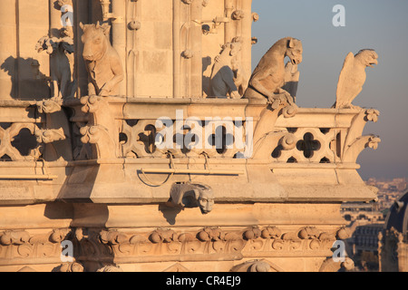 France, Paris, Ile de la Cite, Notre Dame de Paris cathedral, gargoyles on the chimeras hall - Stock Photo