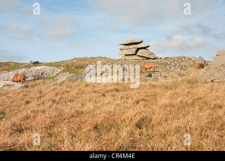 Wild ponies grazing on Showery Tor beside Roughtor on Bodmin Moor near Camelford, north Cornwall, south west England, - Stock Photo