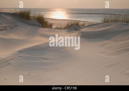 Dunes on Langeoog, Lower Saxony, Germany, Europe - Stock Photo