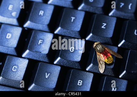 Fly in German national colors on a computer keyboard, symbolic image for the federal trojan - Stock Photo