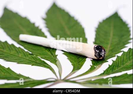 Joint on a cannabis leaf - Stock Photo