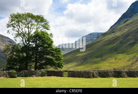 Trees bathed in sunshine at Wasdale Head in the Lake District Cumbria. - Stock Photo