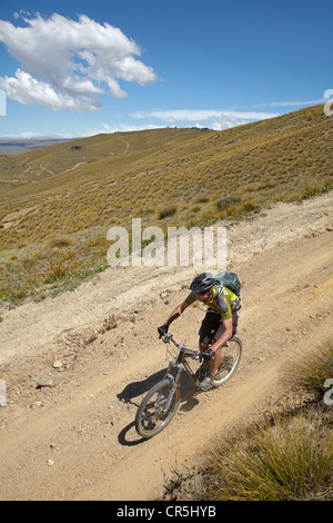 Mountain biker, Carrick Track, Carrick Range, Central Otago, South Island, New Zealand - Stock Photo