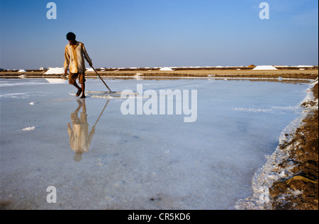 Worker in the saltpans, Malya, Gujarat, India, Asia - Stock Photo