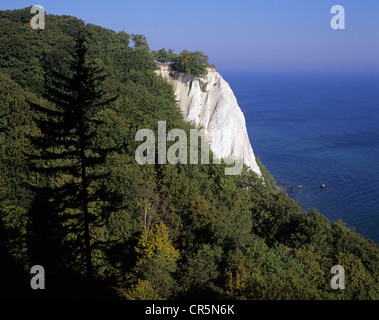 Chalk cliff, Koenigstuhl cliff and a beech forests (Fagus sylvatica) as seen from Victoriasicht viewpoint, a UNESCO - Stock Photo