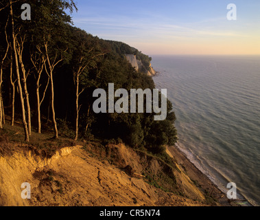 Chalk cliffs and a beech forest (Fagus sylvatica) at sunrise, a UNESCO World Heritage natural site, Jasmund National - Stock Photo