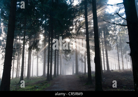 Sun rays penetrating the morning mist in a forest, Mt Feldberg in the Taunus range, Hesse, Germany, Europe - Stock Photo