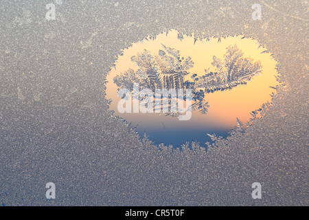 Frost on a window in twilight - Stock Photo