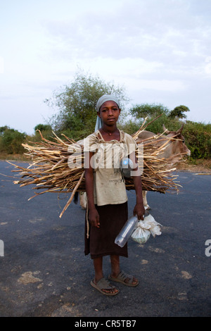 Child carrying firewood, near Arba Minch, Omo Valley, South Ethiopia, Africa - Stock Photo