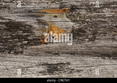 Old wooden pole with a nail - Stock Photo