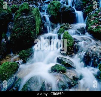 Roaring forest stream with mossy rocks, water, melt water, Glasbach creek, North Rhine-Westphalia, Germany, Europe - Stock Photo