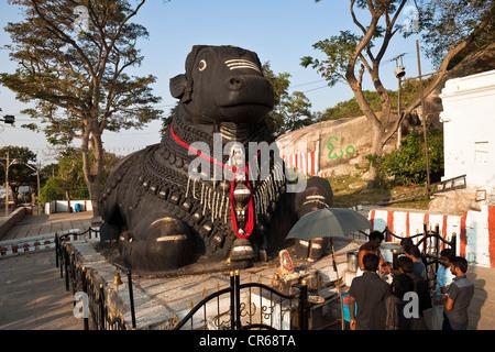 India, Karnataka State, Mysore, Chamundi Hill, Nandi, giant statue of Nandi Bull who is the vahana (or vehicle) - Stock Photo