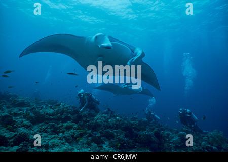 Scuba divers observing Manta Rays (Manta birostris), Ari Atoll, Maldives, Indian Ocean, Asia - Stock Photo