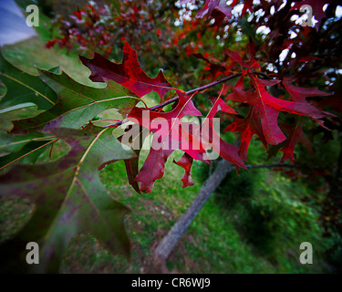 Fall colors - Stock Photo
