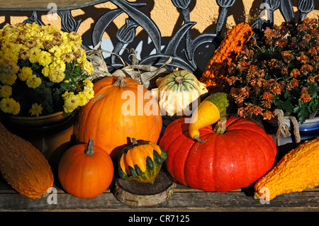 Various pumpkins and gourds for sale, decorated on a bench, Wannbach, Upper Franconia, Bavaria, Germany, Europe - Stock Photo