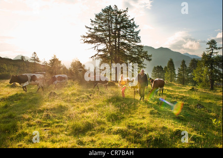 Austria, Salzburg County, Woman and farmer walking in alpine meadow with cows - Stock Photo