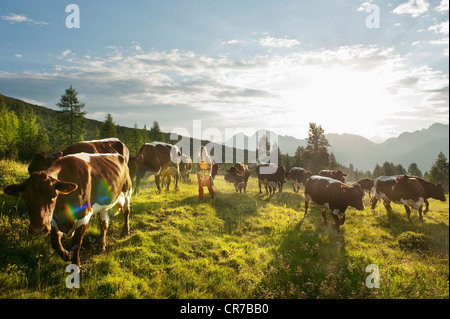 Austria, Salzburg County, Young woman walking in alpine meadow with cows - Stock Photo