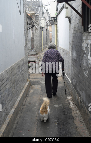 Elderly woman with pet cat in old traditional lane or hutong in Beijing China - Stock Photo