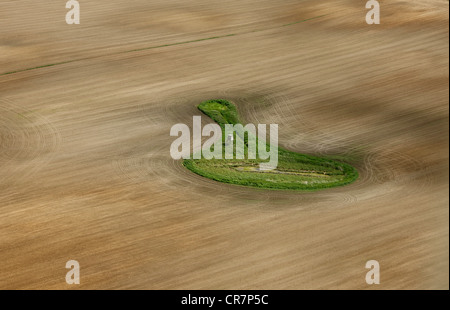 Aerial view, green meadow in the middle of fields, Ludorf, Mueritz, Mecklenburg-Western Pomerania, Germany, Europe - Stock Photo