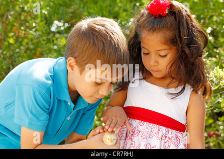 Kids and chick - Stock Photo