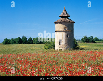 France, Lot, pigeon of Lalbenque region - Stock Photo