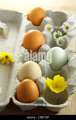 Fresh Organic Eggs in Carton - Stock Photo