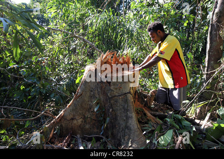 Lumberjack in a clearing of a log area, province of Madang, Papua Neuguinea - Stock Photo