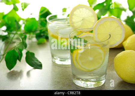 Refreshing Lemon Beverage - Stock Photo